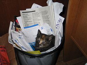 recycled kitten