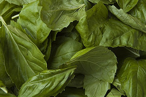 Basil leaves (Ocimum basilicum).