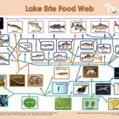 Freshwater Biomes Food Chain Diagram G L Wiring Diagrams File Lake Erie Web Pdf Wikimedia Commons