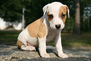 A puppy sitting on the perimeter wall around D...