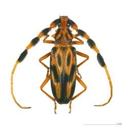 beetle body part diagram labeled [ 1200 x 1152 Pixel ]