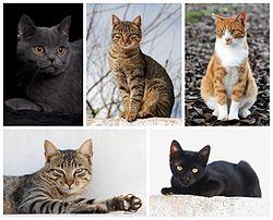 Cat poster 2.jpg
