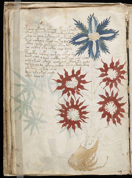 File:Voynich Manuscript (32).jpg