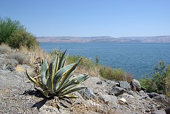 Capernaum, Sea of Galilee