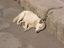 Pompeya  Wikiviajes