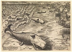 English: Three Beached Whales, a 1577 engravin...