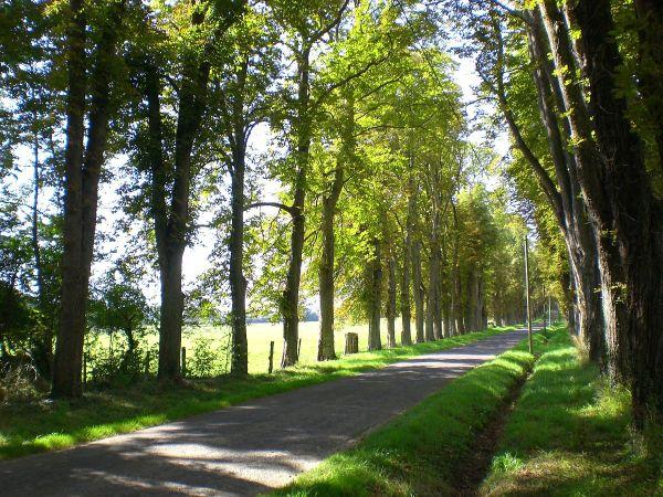 avenue landscape - wikipedia