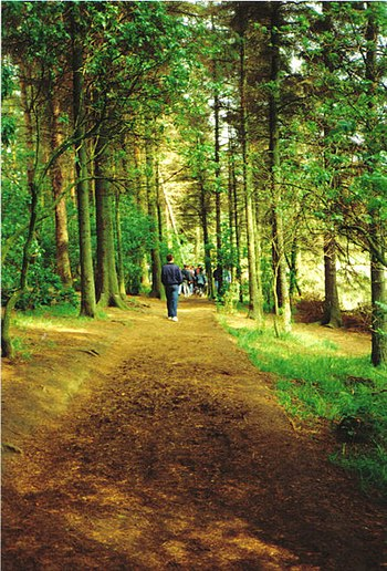 English: Beecraigs walking trail. There are th...