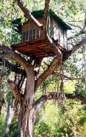 A treehouse in Marayur, Kerala, India