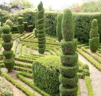 Schnitt (Gartenbau)  Wikipedia