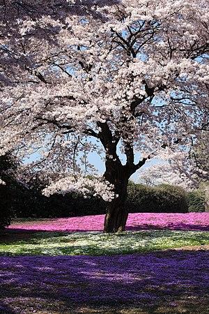 Yachounomori Garden, Tatebayashi-shi(city) Gun...