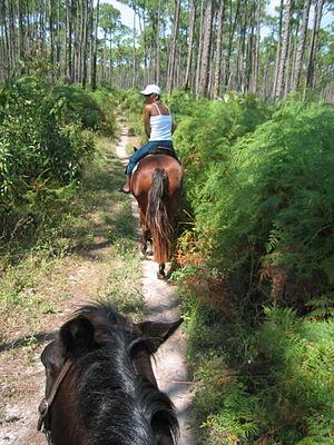 Horseback riding Bahamas 2003