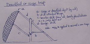 English: Schematic of a deadfall or cage trap....