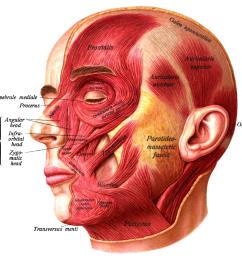 diagram of human anatomy head and neck [ 1200 x 1047 Pixel ]