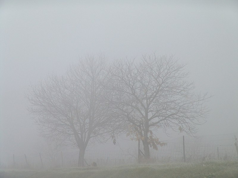 File:TreesInTheFog.jpg