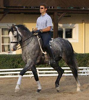 Horse Fabian, Rider Andreas Hausberger