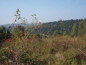 English: View from Juniper Bottom, Box Hill Lo...