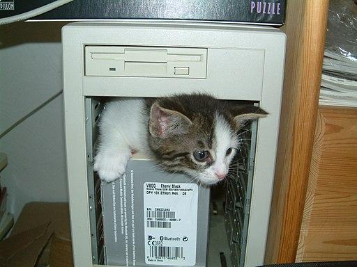 Computer-kitten