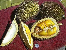 Lai, Durio kutejensis; dari Muara Lawa, Kutai Barat, Kalimantan Timur