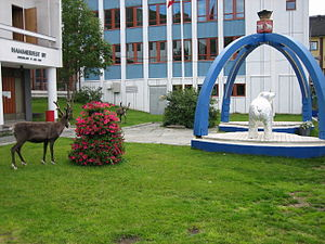Reindeer in the centre of Hammerfest, Norway