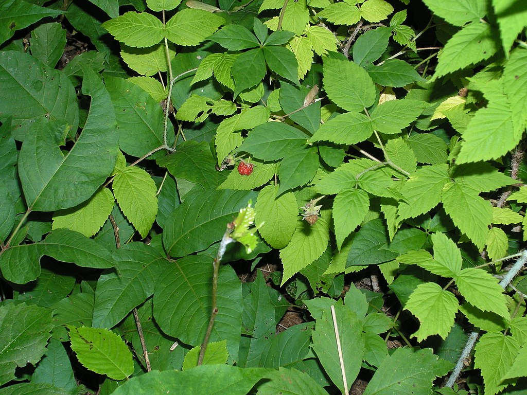 Wild Plants Virginia