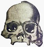 Calaveras Skull.jpg