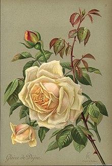 Comme On Voit Sur La Branche Au Mois De Mai La Rose : comme, branche, (fleur), Wikipédia