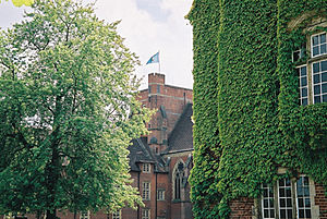 Ardingly ivy