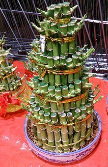 Bamboo  Wikiquote