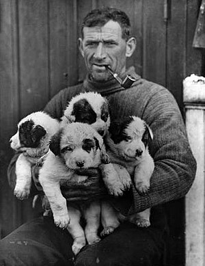 English: Tom Crean with sleigh dog puppies Rog...