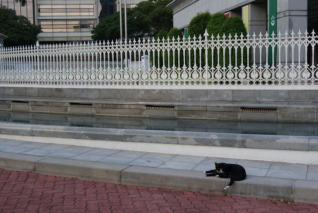 FileBlack cat in front of Parliament House Singapore
