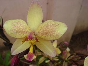 മലയാളം: Orchids belong to orchidaceae family