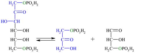 Reaction-F16BP-DOAP-GA3P unlabel.png
