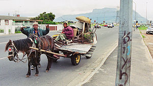 Cape Flats scrap collectors