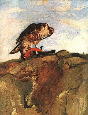 English: Bird of Prey