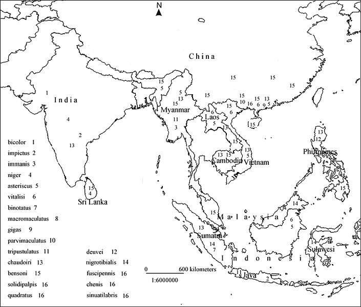 File:Distribution map of Macrocheilus in Southeast Asia