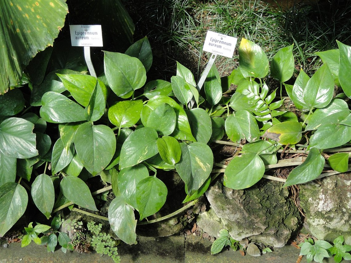Image Result For Missouri Botanical Garden