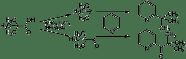 Mechanism of the Minisci-Reaction