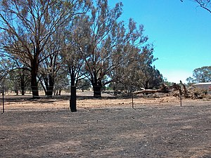 English: Aftermath of the Gregadoo bushfire so...