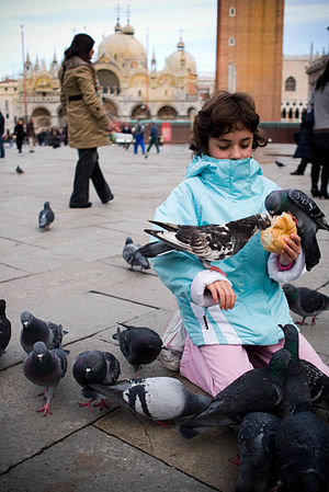 A girl with feral pigeons at Piazza San Marco ...