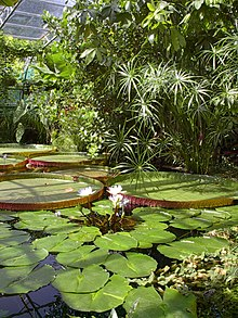 jardin tropical wikipedia