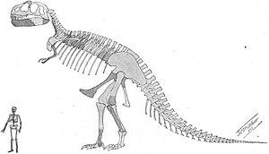 First restoration of a Tyrannosaurus skeleton ...