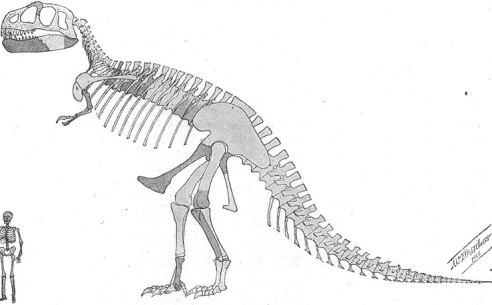 File:Tyrannosaurus skeleton.jpg