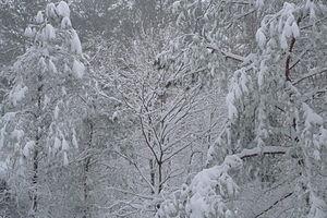 English: Blizzard of February 2010