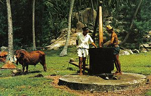 Traditional bullock-powered coconut oil mill. ...