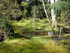 English: The Moss Garden, Bloedel Reserve, Was...