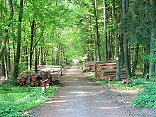 Roads, cars, computers, fertilizers, etc. Forest Product Wikipedia