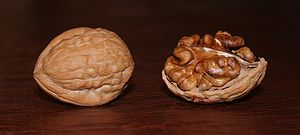 Two Juglans regia walnuts.