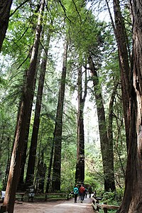 Muir Woods National Monument 28.jpg