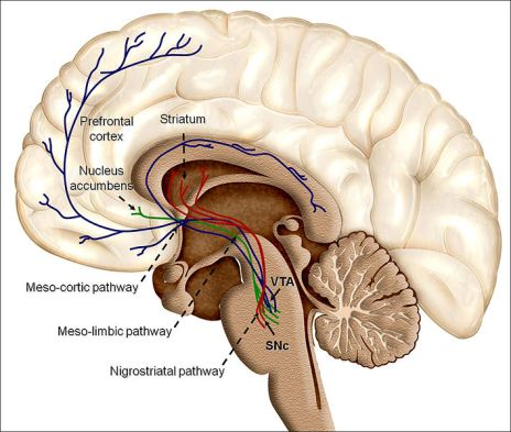 708px-Overview_of_reward_structures_in_the_human_brain The Power of Intrinsic Reward: Strive For Them